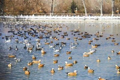 拉萨 候鸟越冬的天堂