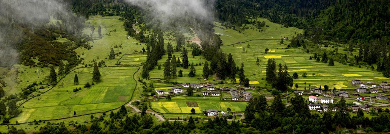 西藏鲁朗:特色小镇引来八方客