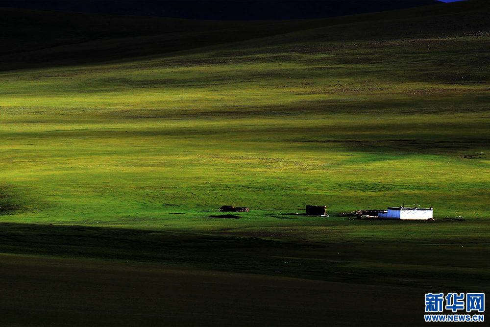 Tibet sees expanding grassland