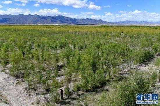 日喀则市南木林县今年完成植树造林3万余亩