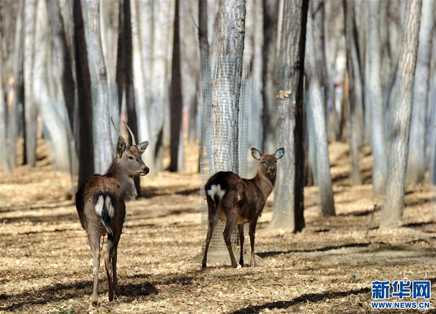 Endangered deer rescued in nature reserve