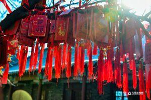 高清:二月去青岛华严寺祈福 古刹春日有大美