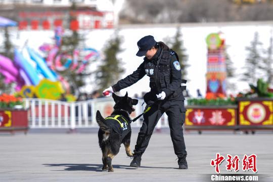 Patrouillierende Polizeihunde in Tibet