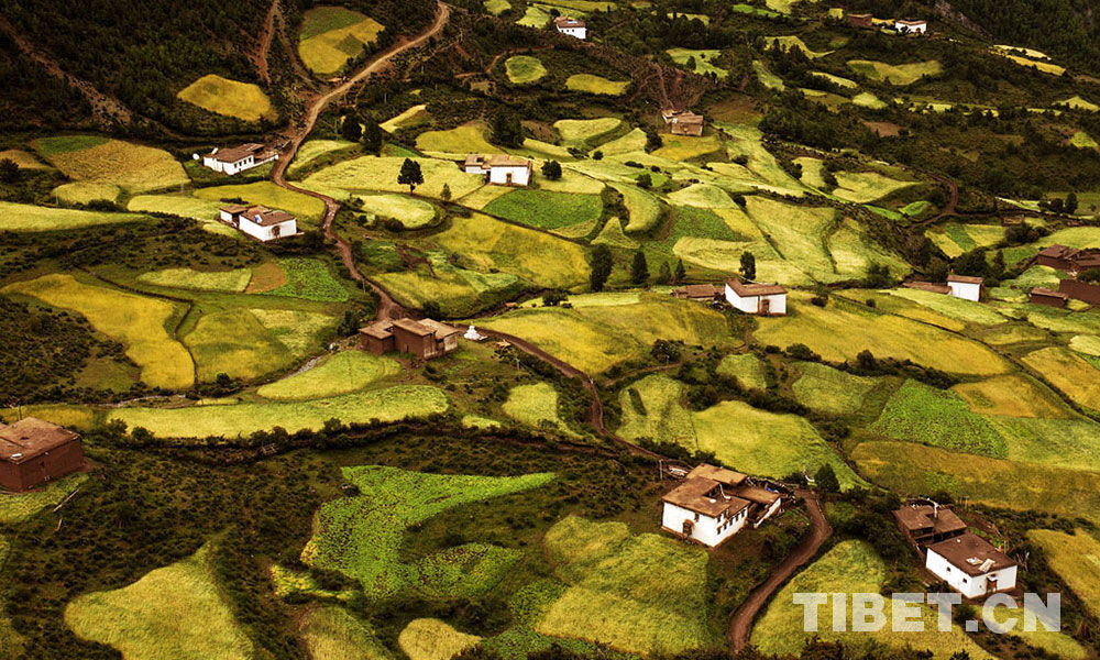 Tibet's forest coverage rate hits 12.14%
