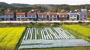 """西藏:农村土地确权改革为农民增收""""加力"""""""