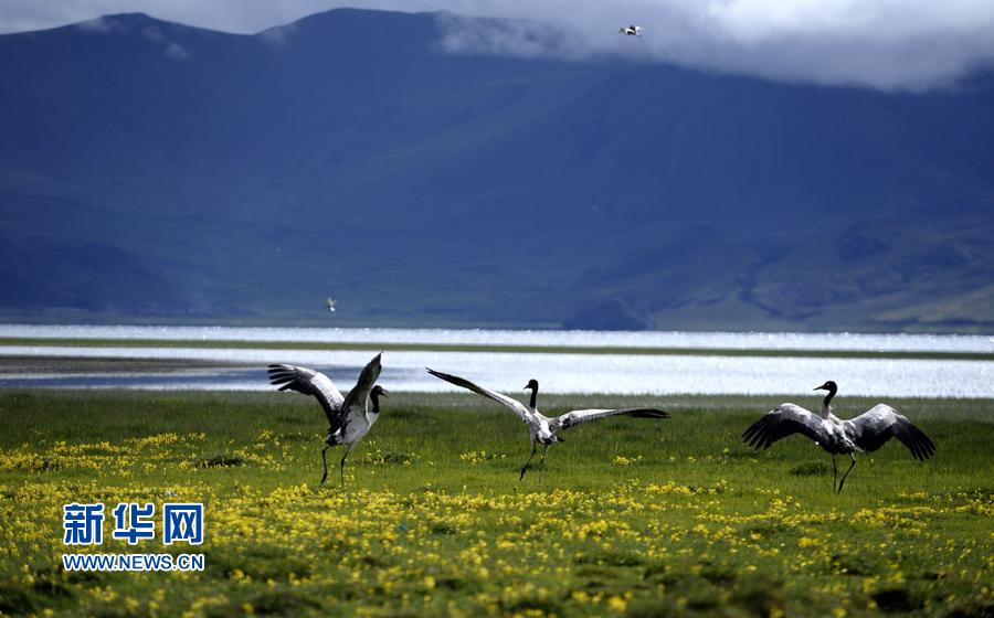 Area of wetland in Tibet ranks second nationwide