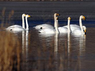 黄河上游的飞禽乐园