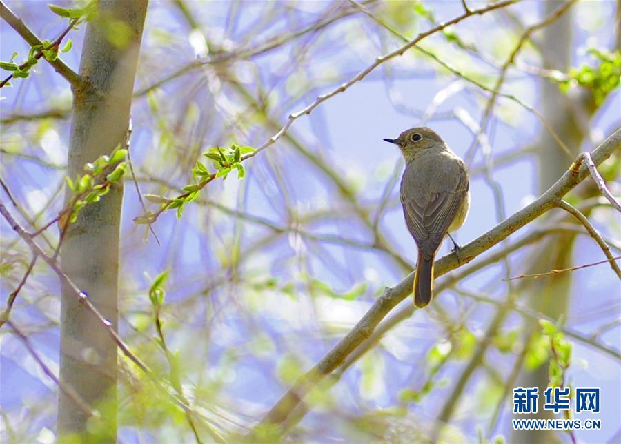 Frühling in Nyingchi
