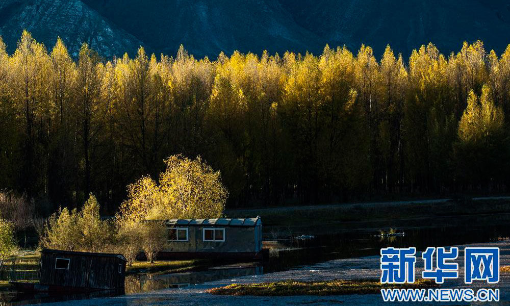 Tibet to plant more forests