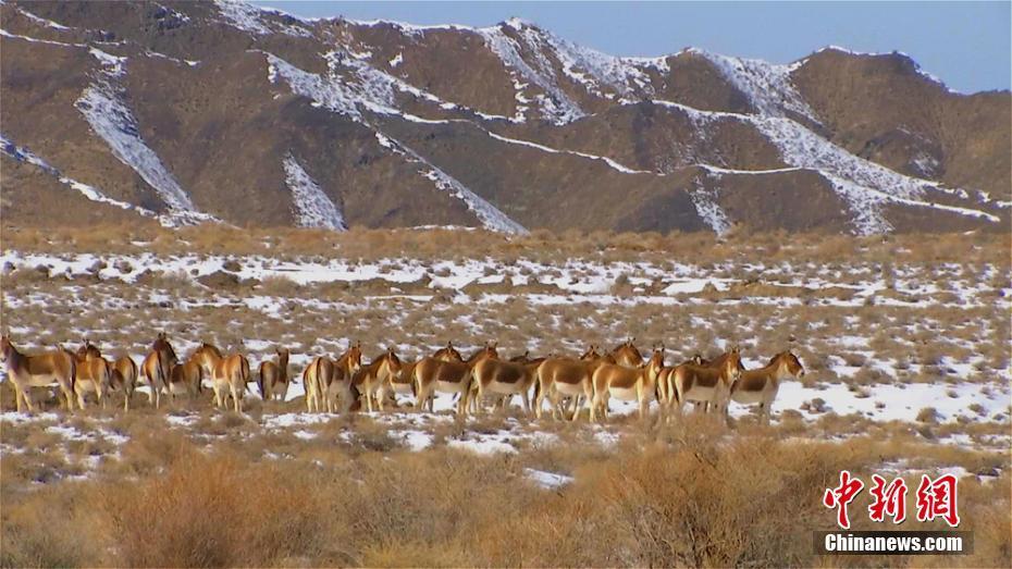 Photos of Kiang in Aksai, Gansu
