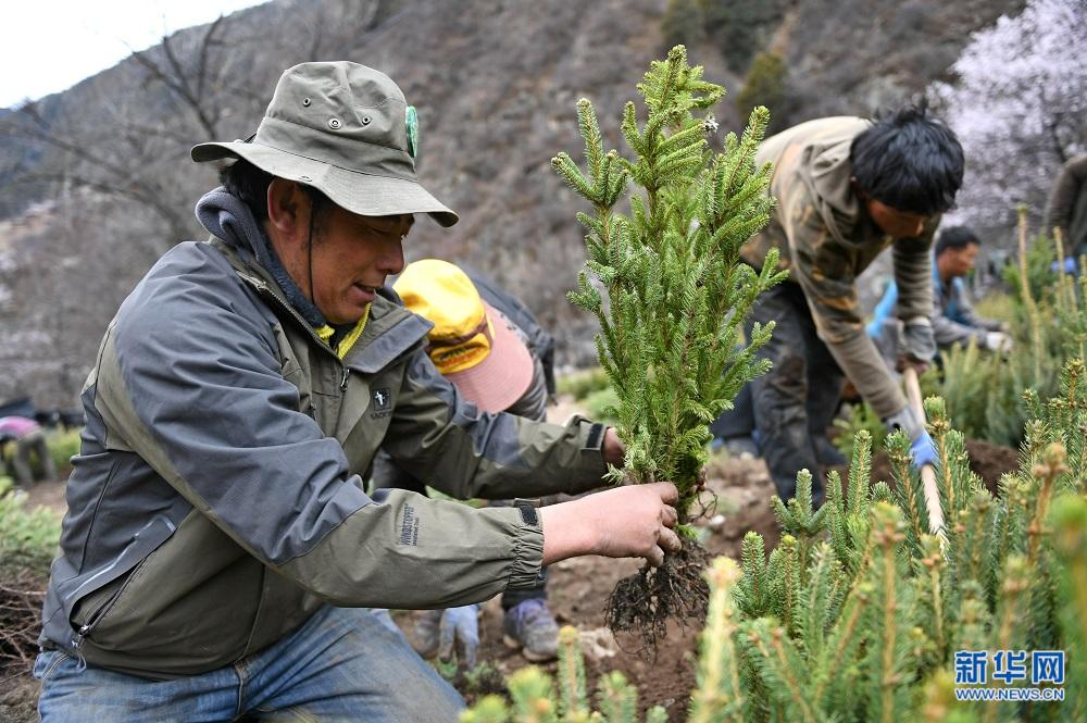 Trees planted to overcome poverty in Chamdo, Tibet