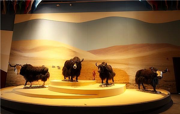Tibetan Yak Museum reopens