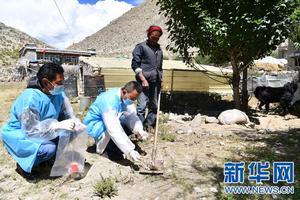 西藏计划2020年基本控制包虫病