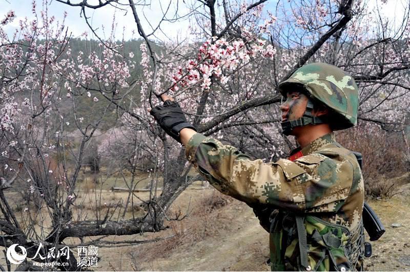 Polizei bei Pfirsichblüten