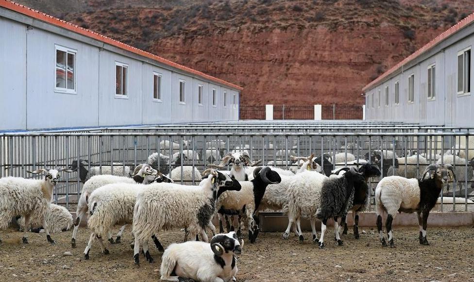Tibet: Schafe bringen Wohlstand