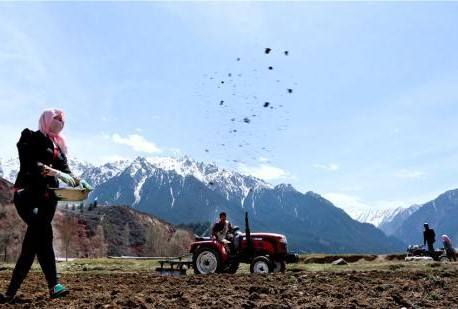 Tibetische Hirten säen beim Qilian-Gebirge