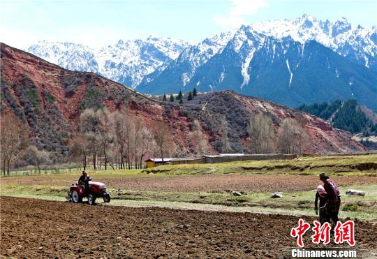 Tibetan nomads busy with planting forage grass