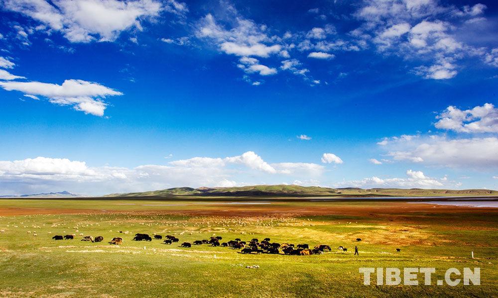 Rising temperatures threaten stability of alpine grasslands: study