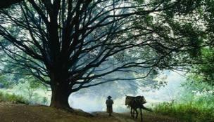 滇中首现千年野生古茶树 填补滇中古茶树空白