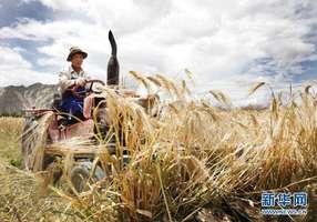 6.2 农户劳作投入和闲暇产生的机理