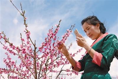 城关区第二届桃花节