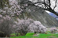 斗玉珞巴民族乡的春色