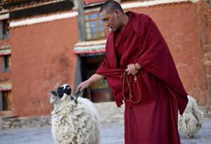 Zulassungsvorschriften des tibetischen buddhistischen Institutes Qinghai