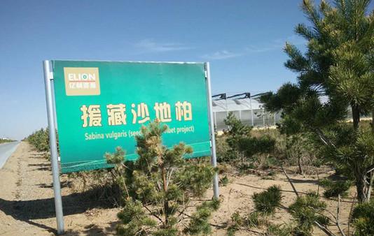 Herausforderung: China pflanzt Bäume in extrem kalten Gebieten