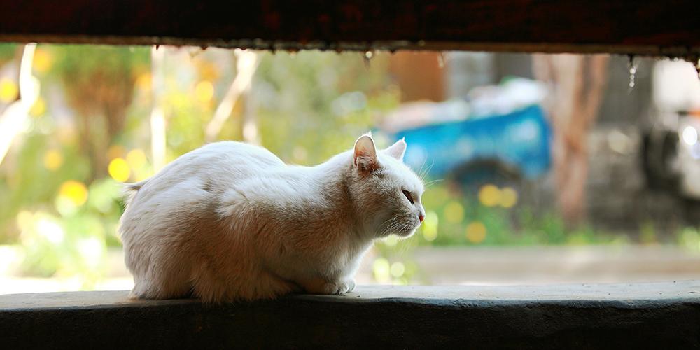 猫咪物语:木如寺的猫