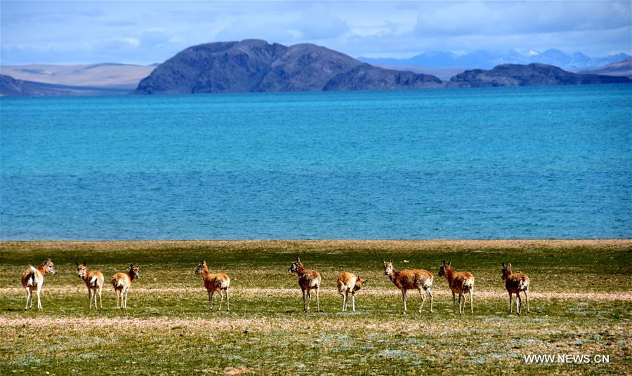 China Exclusive: Growing pains of Tibet's largest lake