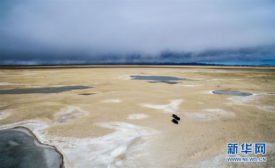 Ecological progress in Sanjiangyuan Area