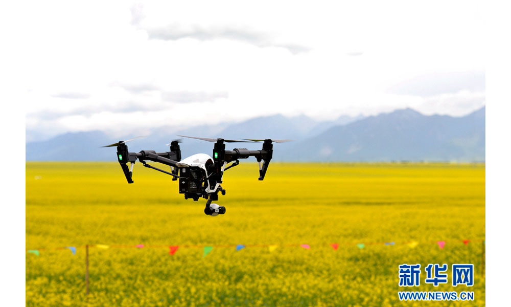 Aerial photos of cole flower in Qinghai