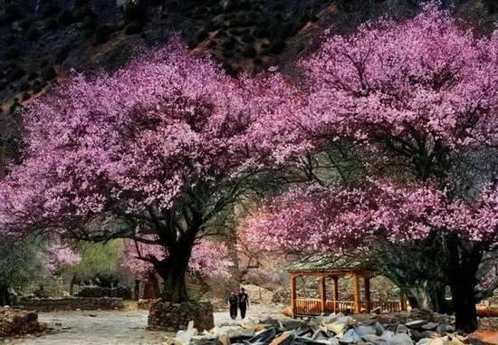 天堂西藏 才是名副其实的花花世界