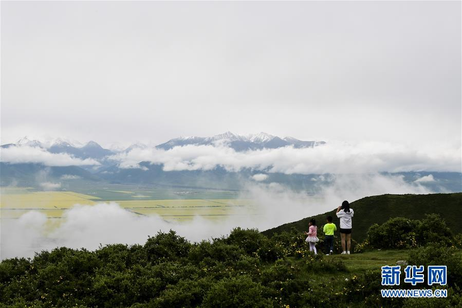 Tourists attracted by cole flowers in Qinghai