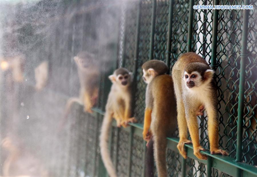 Fruchtige Abkühlung für die Affen im Zoo