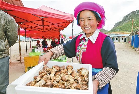 Internet fördert den Matsutake-Markt