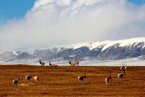 七部门专项监督检查国家级自然保护区