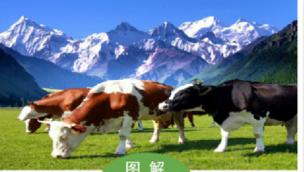图解|拉萨市奶牛产业发展