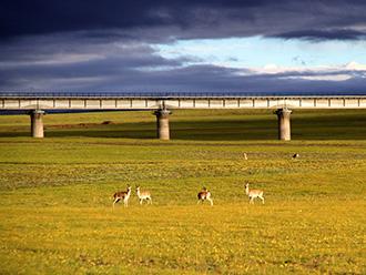 青藏高原最美铁路之旅 一眼望四季