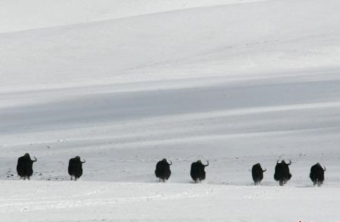 Schneefall und kälteres Wetter in Qinghai