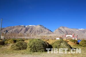 遥感监测显示:西藏人工种草改善草原生态环境成效明显