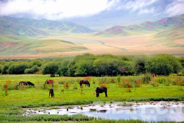 冷冽而浓烈的美——甘肃甘南桑科草原的初秋