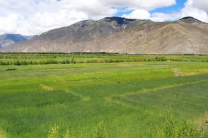 戈壁滩上现绿洲——西藏日喀则南木林生态示范区