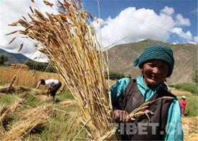 西藏望果节剪影:传承文化 祈福丰收