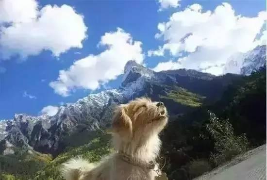 Geschichte des treuen Hundes auf der Straße Sichuan-Tibet