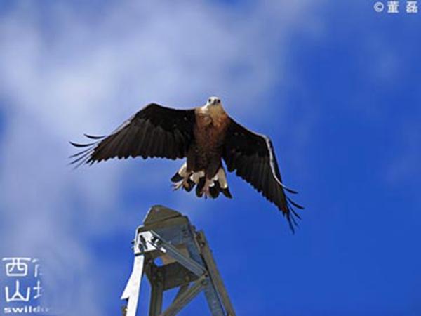 藏东南观鸟胜地 林芝林海藏宝