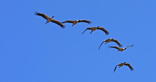 行走山间 生态观鸟摄影攻略