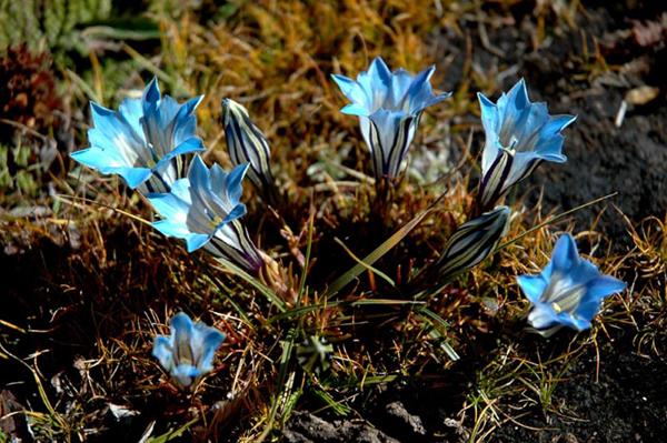 【西藏人文地理】鲜花秘境 从热带河谷到冰原地带