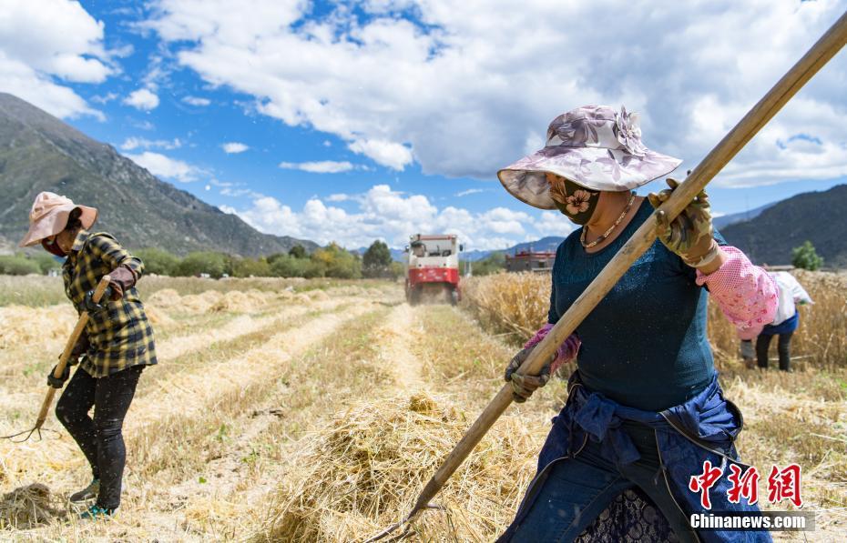 Landwirtschaftsmaschinen helfen bei der Ernte