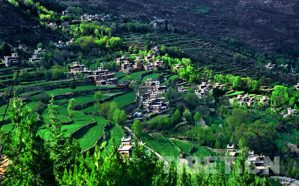 甲居藏寨的金色哈达